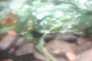 forest_dump_sm2